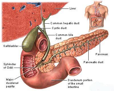 Jaundice Symptoms Causes And Home Remedies Saloni Health