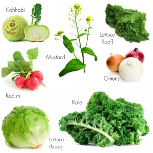Use of Vegetables
